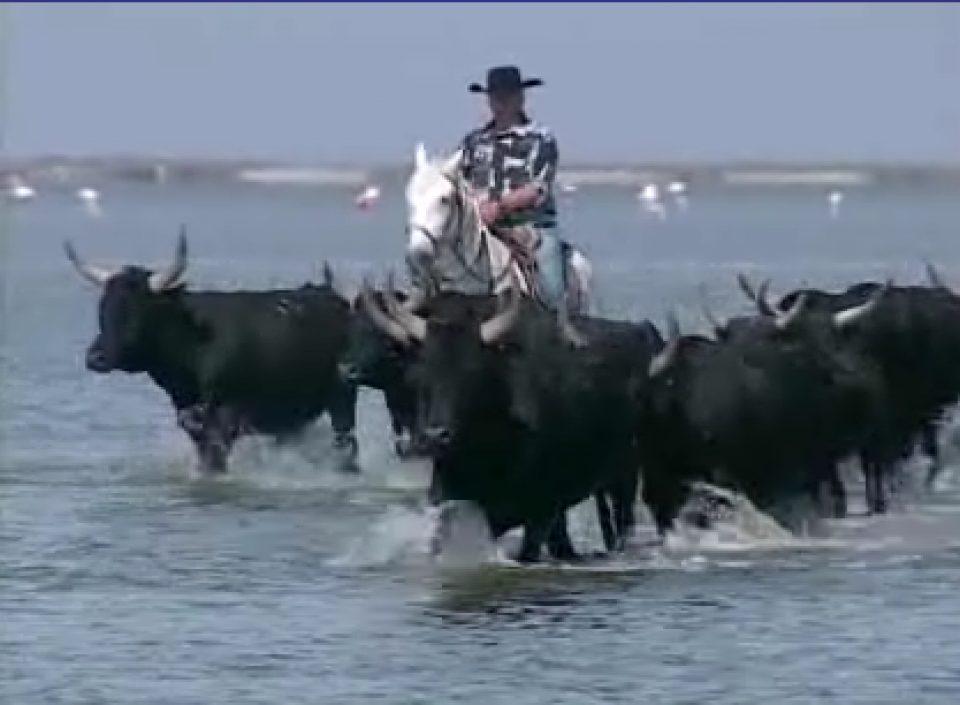 site de rencontre pour les cow-boys les papas contre les filles datant autocollant de pare-chocs